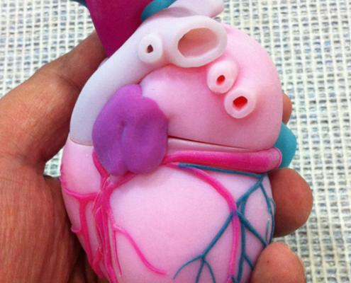 3D Printed Heart Model - Full