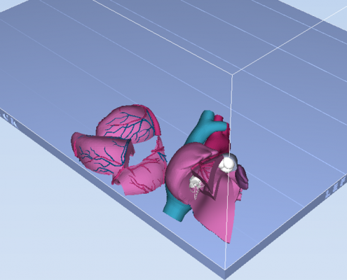 3D Printed Heart - Top View